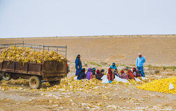 Αραβικές γυναίκες στην εργασία Στοκ Εικόνες