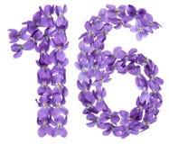 Αραβικός αριθμός 16, δέκα έξι, από τα λουλούδια του viola, που απομονώνονται στο W Στοκ Εικόνες