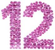 Αραβικός αριθμός 12, δώδεκα, από τα λουλούδια της πασχαλιάς, που απομονώνονται στο wh Στοκ εικόνα με δικαίωμα ελεύθερης χρήσης