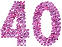 Αραβικός αριθμός 40, σαράντα, από τα λουλούδια της πασχαλιάς, που απομονώνονται στο whi στοκ εικόνα με δικαίωμα ελεύθερης χρήσης