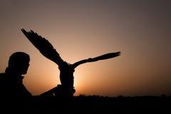 Αραβικό άτομο με το κυνήγι του γερακιού Στοκ Φωτογραφίες