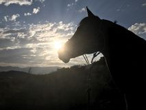 Αραβικό ηλιοβασίλεμα σκιαγραφιών αλόγων στοκ εικόνες