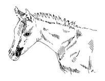 Αραβικό foal πορτρέτο σκίτσων Στοκ Φωτογραφίες