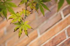 Αργά μαραμένα φύλλα Στοκ φωτογραφία με δικαίωμα ελεύθερης χρήσης