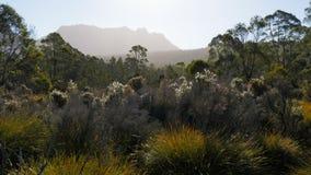 Αργά το απόγευμα ήλιος στο ossa ΑΜ στο εθνικό πάρκο βουνών λίκνων απόθεμα βίντεο