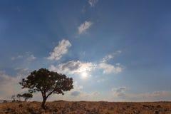 Αργά το απόγευμα ήλιος Στοκ εικόνα με δικαίωμα ελεύθερης χρήσης