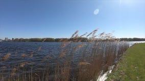Αργές κινήσεις 240fps άποψης λιμνών απόθεμα βίντεο