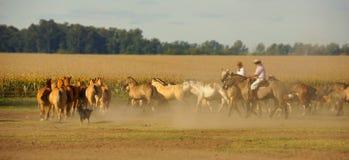 Αργεντινοί κάουμποϋ και άλογα Στοκ εικόνα με δικαίωμα ελεύθερης χρήσης