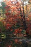 Αργός ποταμός φθινοπώρου στοκ εικόνες