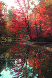 Αργός ποταμός φθινοπώρου στοκ φωτογραφία με δικαίωμα ελεύθερης χρήσης
