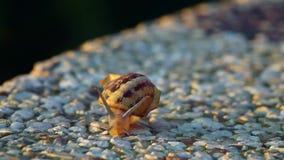 Αργό σαλιγκάρι στο ηλιοβασίλεμα απόθεμα βίντεο