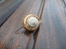 Αργό σερνμένος σαλιγκάρι Στοκ εικόνα με δικαίωμα ελεύθερης χρήσης