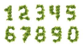 αριθμοί πράσινοι Στοκ Εικόνες