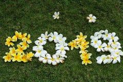 Αριθμοί των κίτρινων και άσπρων λουλουδιών στην πράσινη χλόη στοκ φωτογραφία με δικαίωμα ελεύθερης χρήσης