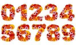 αριθμός λουλουδιών Στοκ Εικόνες