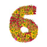 αριθμός 6 που γίνεται από τα λουλούδια Zinnias Στοκ φωτογραφίες με δικαίωμα ελεύθερης χρήσης