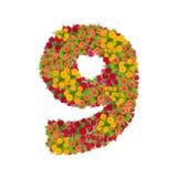 αριθμός 9 που γίνεται από τα λουλούδια Zinnias Στοκ εικόνα με δικαίωμα ελεύθερης χρήσης