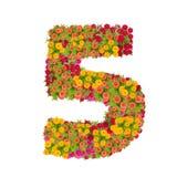 αριθμός 5 που γίνεται από τα λουλούδια Zinnias Στοκ Φωτογραφίες