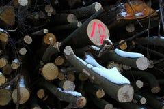 Αριθμός 17 στο κόκκινο στο δάσος Στοκ Φωτογραφία