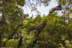 Αριθμός Brachiosaurus Στοκ εικόνα με δικαίωμα ελεύθερης χρήσης