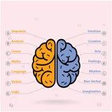 Αριστερός εγκέφαλος και σωστό σύμβολο εγκεφάλου, σημάδι δημιουργικότητας, ελεύθερη απεικόνιση δικαιώματος