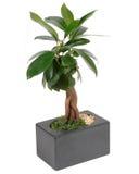 αριστερό φυτό στοκ φωτογραφίες