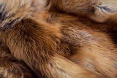 Αριστοκρατική και πολυτελής κόκκινη γούνα αλεπούδων στοκ εικόνες
