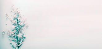 Αρκετά άγρια λουλούδια μαργαριτών στο μπλε υπόβαθρο κρητιδογραφιών, τοπ άποψη Στοκ Φωτογραφίες
