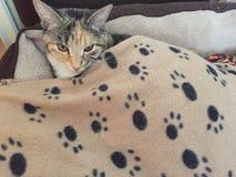 Αρκετά θηλυκή γάτα Στοκ Εικόνες