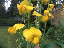Αρκετά κίτρινα λουλούδια Στοκ Εικόνες