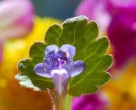 Αρκετά μικροσκοπικό λουλούδι και τα σταγονίδια της βροχής Στοκ Εικόνες