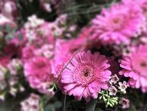 Αρκετά ρόδινο λουλούδι στην εστίαση λουλούδια που θολώνονται άλλα στοκ εικόνες