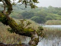 Αρκετά σημείο στη λίμνη σε Connemara, Ιρλανδία στοκ φωτογραφίες