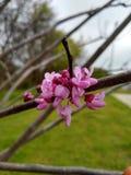 Αρκετά στα ρόδινα άνθη στοκ εικόνες με δικαίωμα ελεύθερης χρήσης