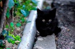 Αρκετά χαριτωμένο μαύρο γατάκι Στοκ φωτογραφία με δικαίωμα ελεύθερης χρήσης