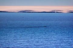 Αρκτικοί παγετώνες νησιών, snowfields και επανθίσεις βράχου Στοκ εικόνα με δικαίωμα ελεύθερης χρήσης