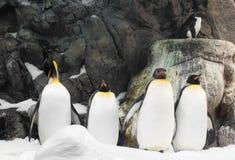 Αρκτικός βασιλιάς penguin, ομάδα penguins Στοκ φωτογραφία με δικαίωμα ελεύθερης χρήσης