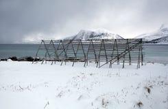 Αρκτικό ξεραίνοντας ράφι ψαριών βακαλάων Στοκ Εικόνες