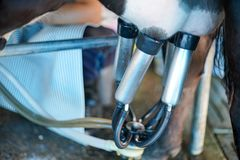 Αρμέγοντας δυνατότητα αγελάδων και μηχανοποιημένος αρμέγοντας εξοπλισμός στοκ εικόνες με δικαίωμα ελεύθερης χρήσης