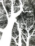 Αρνητική εικόνα ένα γυμνό στριμμένο χειμώνας δέντρο Στοκ Εικόνες