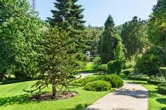 Αροκάρια Χιλιανός - araucana Molina Κ αροκαριών Koch στον παράδεισο πάρκων Partenit, Κριμαία, Στοκ Φωτογραφία