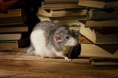 Αρουραίοι και βιβλία Στοκ φωτογραφία με δικαίωμα ελεύθερης χρήσης