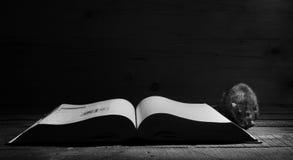 Αρουραίος και ανοικτό βιβλίο στοκ φωτογραφία με δικαίωμα ελεύθερης χρήσης