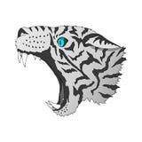 Αρπακτικός επικεφαλής ζωηρόχρωμος τιγρών που απομονώνεται ελεύθερη απεικόνιση δικαιώματος