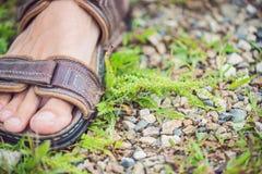 Αρσενικά πόδια αμβροσιών ποδοπατήματος, που προκαλούν την αλλεργία σε πολλούς ανθρώπους Στοκ Εικόνα