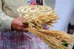 Αρσενικά χέρια που κρατούν την ανθοδέσμη δημητριακών Στοκ Εικόνες