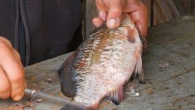 Αρσενικά χέρια που ξεφλουδίζουν τις κλίμακες ψαριών στον ξύλινο πίνακα φιλμ μικρού μήκους