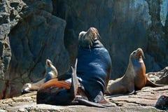 Αρσενικές και θηλυκές σφραγίδες που στον ήλιο στο τέλος εδαφών Cabo SAN Lucas (Los Arcos) Μεξικό Στοκ εικόνες με δικαίωμα ελεύθερης χρήσης