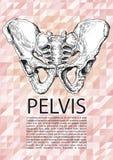 Αρσενική αφίσα λεκανών Στοκ Εικόνα