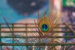 Αρσενική ουρά peacocks που κλειδώνεται από ένα κλουβί χάλυβα Στοκ Φωτογραφίες